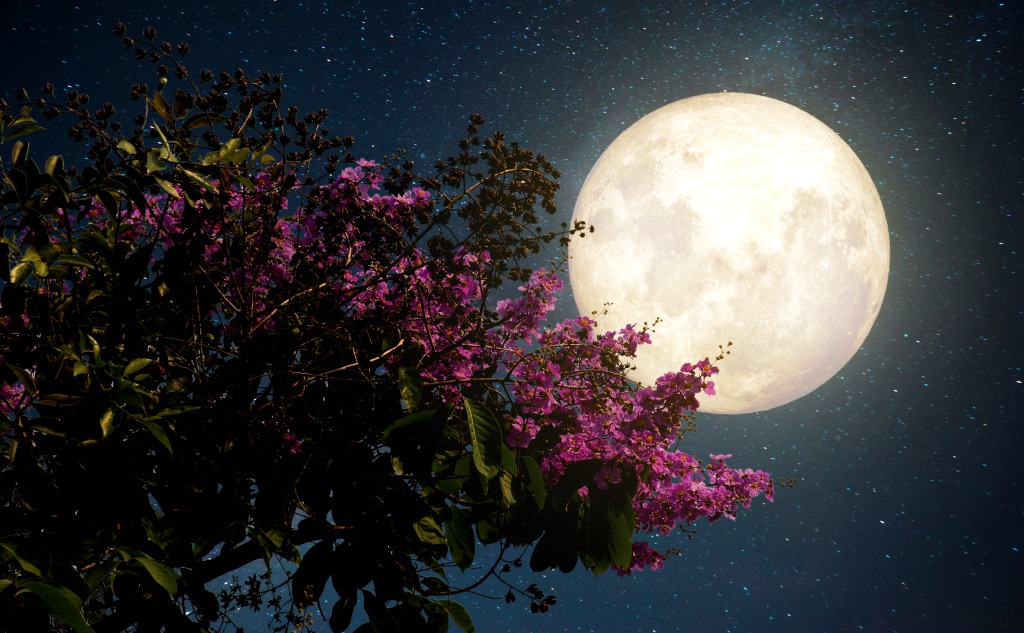 May flower moon.