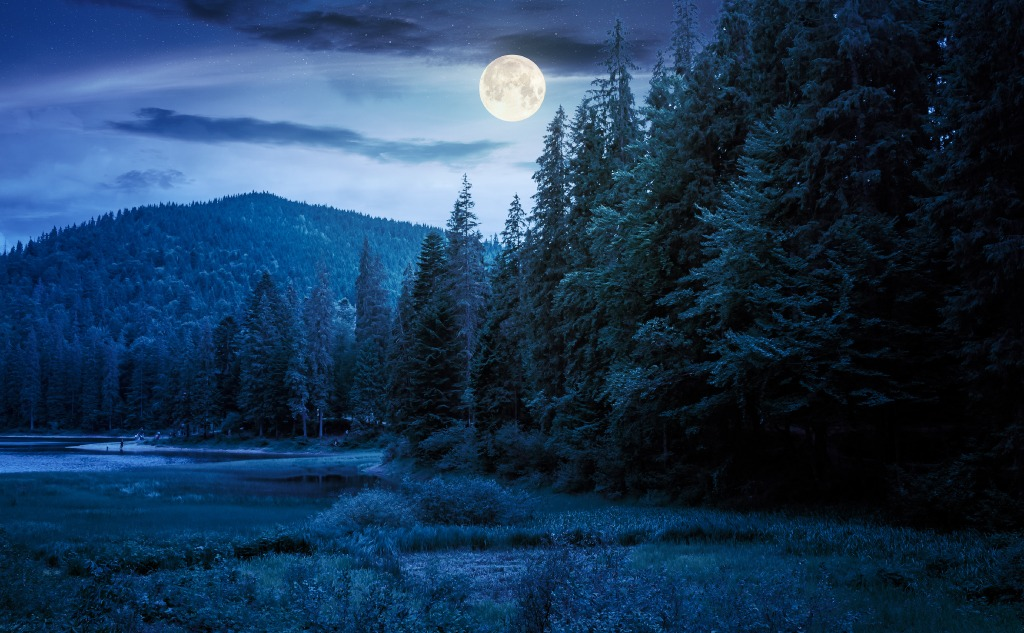 November beaver moon.